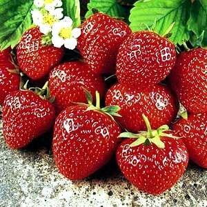 fraise sucrée